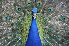 Animal, Photography, Beautiful Stock Photo