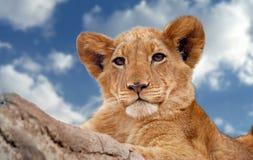 Animal, Photography, Big Stock Photography
