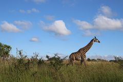 Animal, Photography, Blue Stock Photography