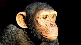 Animal, Photography, Blur Royalty Free Stock Image