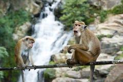 Animal, Photography, Blur stock photo