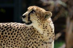 Animal, Photography, Blur Royalty Free Stock Photos