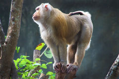 Animal Stock Image