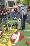 Animal Planet Puppy Bowl Super Bowl Weekend. Downtown Phoenix celebrated hosting Super Bowl XLIX and Pro Bowl with many special NFL football fan attractions to royalty free stock image