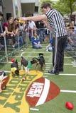 Animal Planet Puppy Bowl Super Bowl Weekend royalty free stock image
