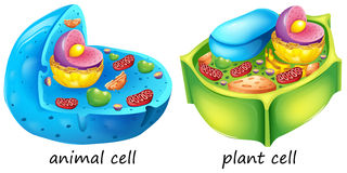 Animal and plant cells Royalty Free Stock Photos