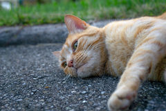 Animal portrait. Portrait of a cat relaxing on the street on a summer day stock photography