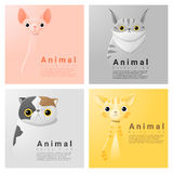 Animal portrait collection with cats Stock Photography