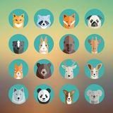 Animal Portraits Icon Set in Flat Style With Stock Photo
