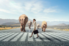Animal power and stength. Elegant businesswoman and huge elephant walking on road Royalty Free Stock Image