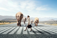 Animal power and stength . Mixed media. Elegant businesswoman and huge elephant walking on road Royalty Free Stock Image