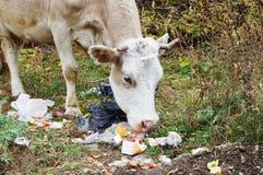 Animal près des déchets ! photo libre de droits