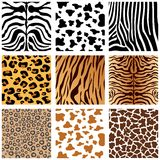 Animal Print. A some animals skin collection Stock Images
