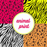 Animal print Royalty Free Stock Images