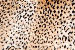 Animal print background Royalty Free Stock Image