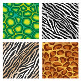 Animal Print Background Stock Photo