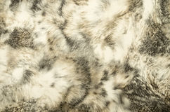 Animal print Background Texture Royalty Free Stock Images