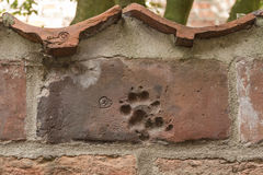 Animal print on a brick wall in baker corridor in luebeck.  Stock Images