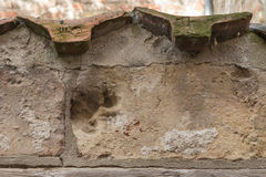 Animal print on a brick wall in baker corridor in luebeck.  Royalty Free Stock Photo
