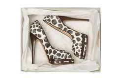 Animal print high heel shoes in box. Isolated on white background stock photography