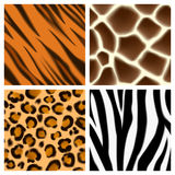 Animal print seamless patterns. A set of detailed animal print seamless patterns or textures. Giraffe, cheetah or leopard, zebra and tiger skins Royalty Free Stock Photo