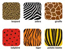 Animal prints. Set of 6 animal and insect prints Royalty Free Stock Photography