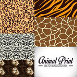 Animal prints design. Stock Photos