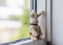 Animal protection.Dreamily bunny sitting alone on the windowsill. Royalty Free Stock Images