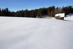 Animal-pure in the snow. Untouched schneeschlandschaft before an old wooden hut, only animal-pure are in the deep snow Royalty Free Stock Photo