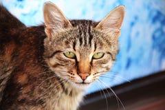 Animal que olha a câmera Imagens de Stock