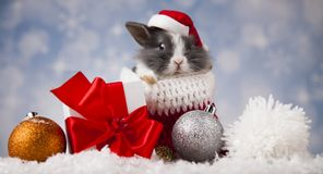 Holiday Christmas bunny in Santa hat on gift box background stock photo