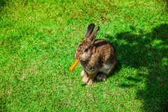 Animal is a rabbit stock photography