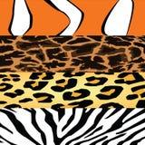 Animal rayé Images libres de droits