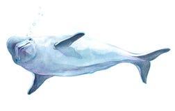 Animal realístico do golfinho da aquarela isolado ilustração do vetor