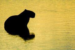 Animal reflex. An animal in the lake Stock Photos