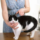 Animal reiki. Beautiful cat receives reiki therapy from an experienced holistic practitioner