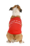 Animal rescue or adoption. Dog with back to camera with message on shirt I have to ask .... am I adopted Royalty Free Stock Photography