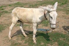 Animal Rights Stock Photo