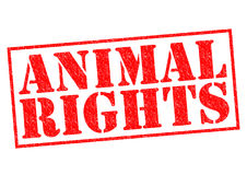 ANIMAL RIGHTS. Red Rubber Stamp over a white background Royalty Free Stock Photos