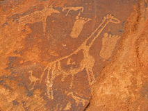 Animal rock engravings, Twyfelfontein, Namibia Royalty Free Stock Photo
