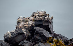 Animal on the Rock in the sea with wave Royalty Free Stock Photos
