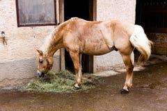 Animal rojo derecho de /domestic del caballo Imagenes de archivo
