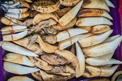 Animal`s fang amulet for sale. Souvenirs made of animal`s bone and tooth for sale as amulet at the Thai-Cambodia border market. Animal`s fang amulet for sale stock photography