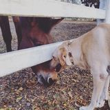 Animal's greeting. Dog and horse are greeting each other Stock Image