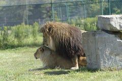 Animal's love Stock Photos