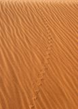 Animal's tracks in the desert Royalty Free Stock Photography