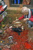 Animal Sacrifice in Bhaktapur during Dasai Stock Image