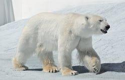 Animal safari park in Gelendzhik Royalty Free Stock Images