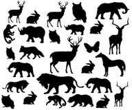 Animal salvaje Foto de archivo