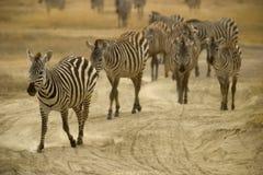 Animal salvaje en África, parque nacional del serengeti Foto de archivo